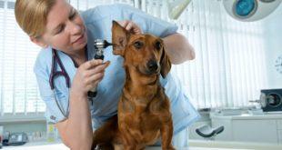 Принципы работы ветеринарной клиники
